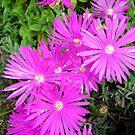 Pink and Bright by Esperanza Gallego
