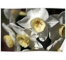 Kicking Back - Daffodils Poster
