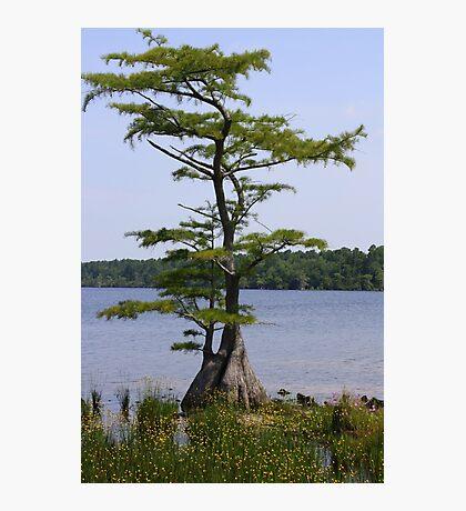 Inspiration Tree Photographic Print