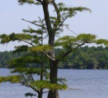 Inspiration Tree Sticker