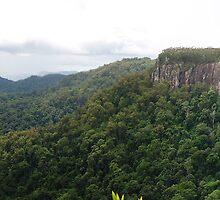 Springbrook Cliffs by Michael Dearden