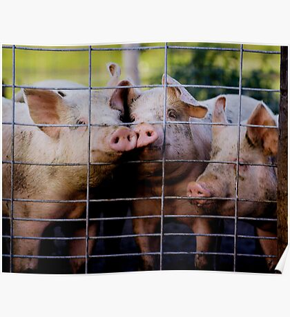 Three Pigs of Porkland Poster