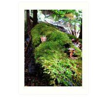 Springbrook National Park - Moss Art Print