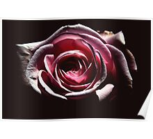 shadowy rose Poster