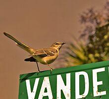 South Carolina Wren by Wendy Mogul