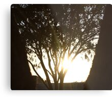 Bright Shadows Metal Print