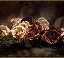 Antique Roses by Margaret Metcalfe
