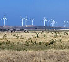 Yambuk wind farm by Roger Neal