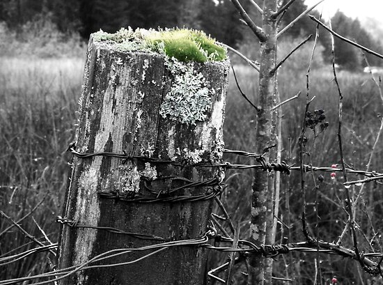 old fence post by tego53