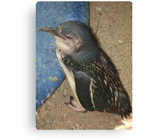 Penguin (4934) Canvas Print