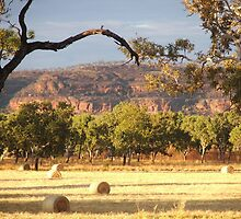 Smell of Hay - Victoria River NT by Rosdenphoto
