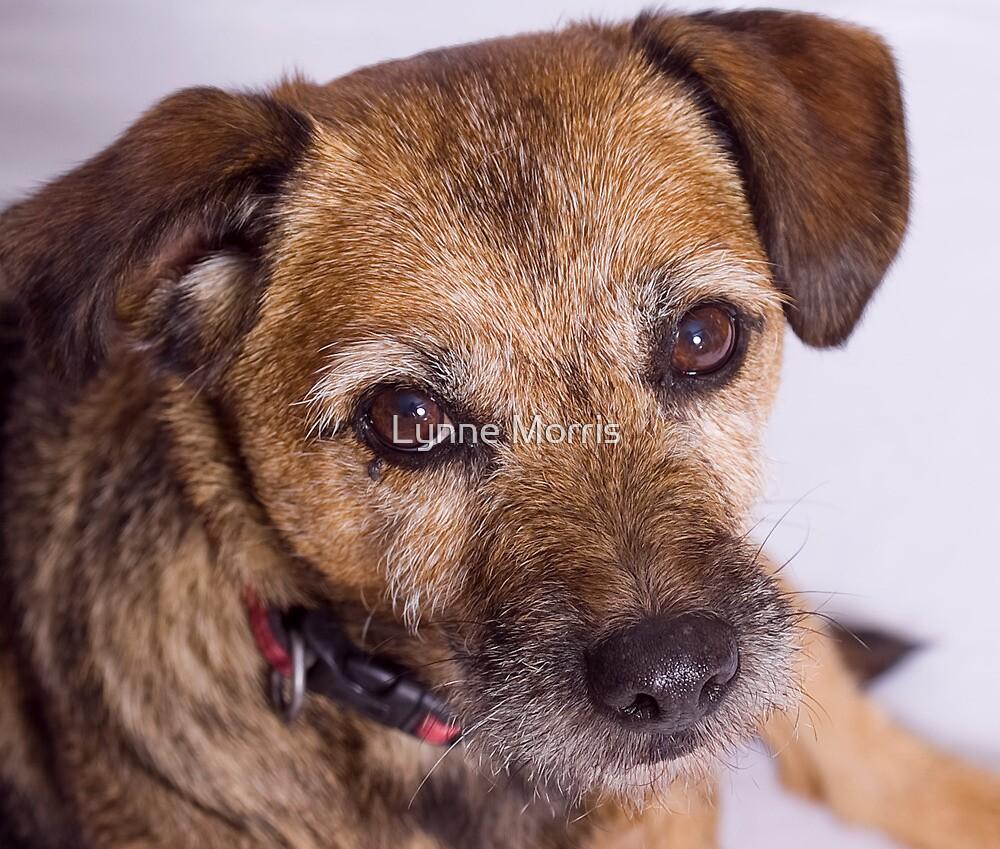 Puppy Dog Eyes by Lynne Morris