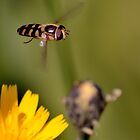 Hovering around by NaturesEarth