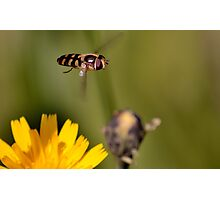Hovering around Photographic Print