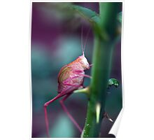 Resting on a Rose Thorn Poster
