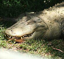 Alligator by ScenerybyDesign