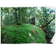 Rainforest Undergrowth Poster