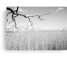 Touching sky Canvas Print