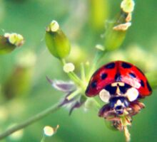 Ladybug on green Sticker