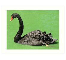 Black Swan (5004) Art Print