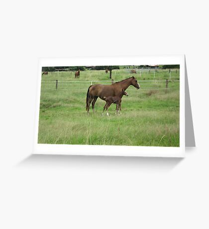 A Mare and her Foal in Rural Kempsey, N.S.W. Australia. Greeting Card