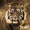 SEPIA: ANIMAL PORTRAIT