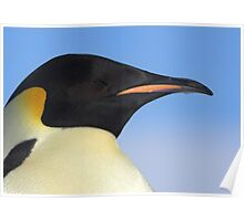 Emperor Penguin Headshot Poster