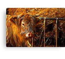 Highland Cow #1 Canvas Print