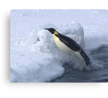 Emperor Penguin Launch Canvas Print