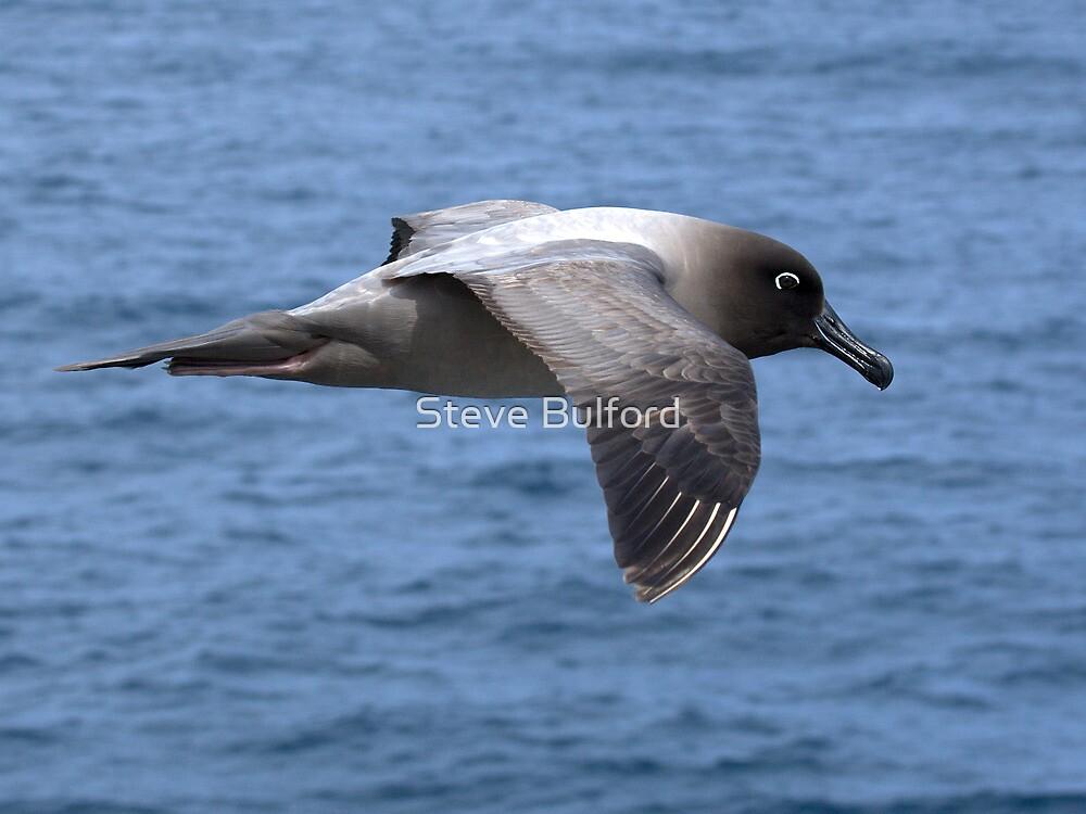 Light Mantled Sooty Albatross by Steve Bulford