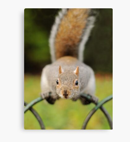 Gimmee Nuts! Canvas Print