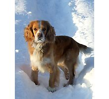 paws in the snow Photographic Print
