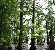 Fishing Reelfoot Lake by amyklein196203