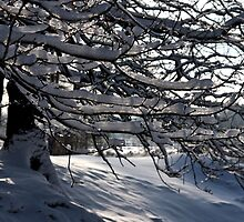 Frozen Twigs #3 by Britta Döll