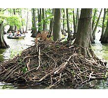 Pile of Sticks? Photographic Print
