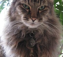 Mr. Kitty decked out in his winter fluff by nosajnybor