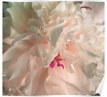 Light Pink Peony Poster