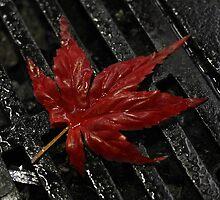 Fall in Shibuya by warai-otoko