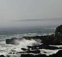The Rockbound Coast of Maine by MaryinMaine