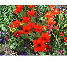 The joys of spring Photographic Print