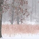 Pastel Colors During The Snow Storm by NatureGreeting Cards ccwri