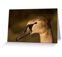 Juvenile Mute Swan Greeting Card