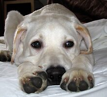 Brannoc Big Paws by Fe Messenger