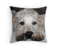 Brannoc Big Paws Throw Pillow