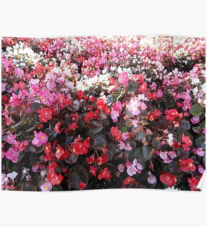 Red and Pink Flower Patch Poster