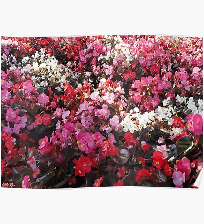 Red and Pink Flower Patch Version II Poster
