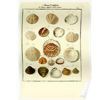 Neues systematisches Conchylien-Cabinet - 326 Poster