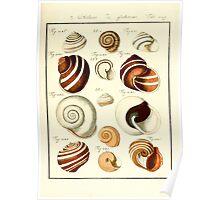 Neues systematisches Conchylien-Cabinet - 392 Poster