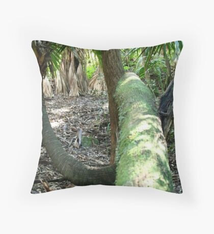 Cabbage Tree Palm Throw Pillow