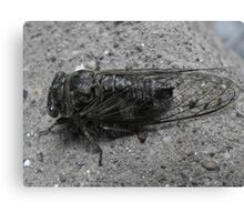 Cicada Bug Canvas Print